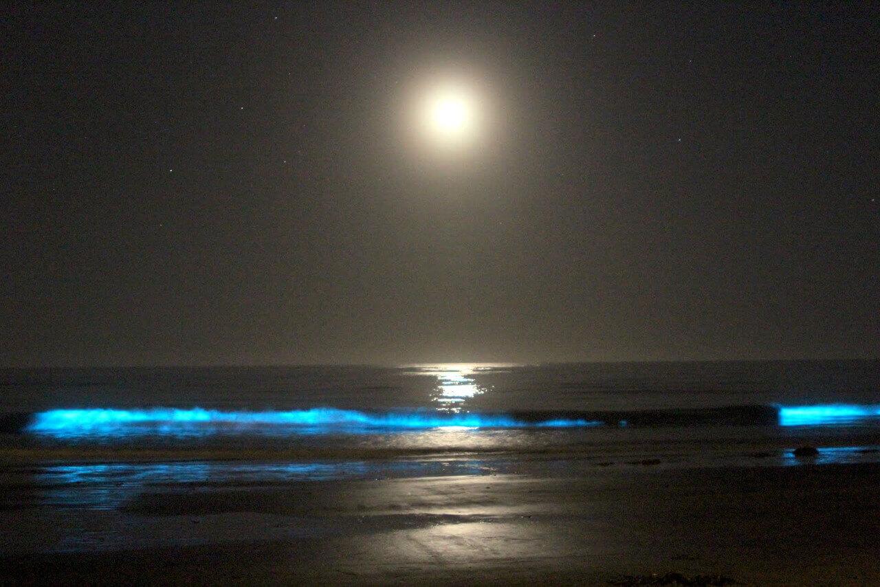 Moonlight at Vaadhoo Island