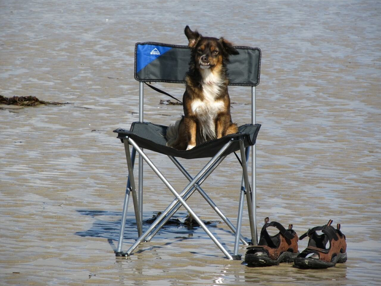 dog on camping chair