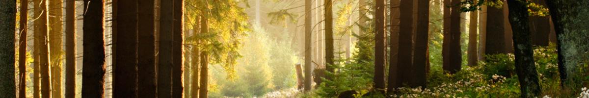 Bannerforest b4b63021