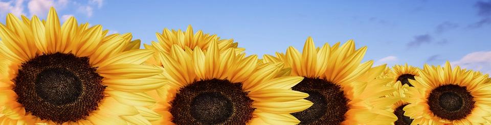 Sunflowerbanner960 cda2aa80