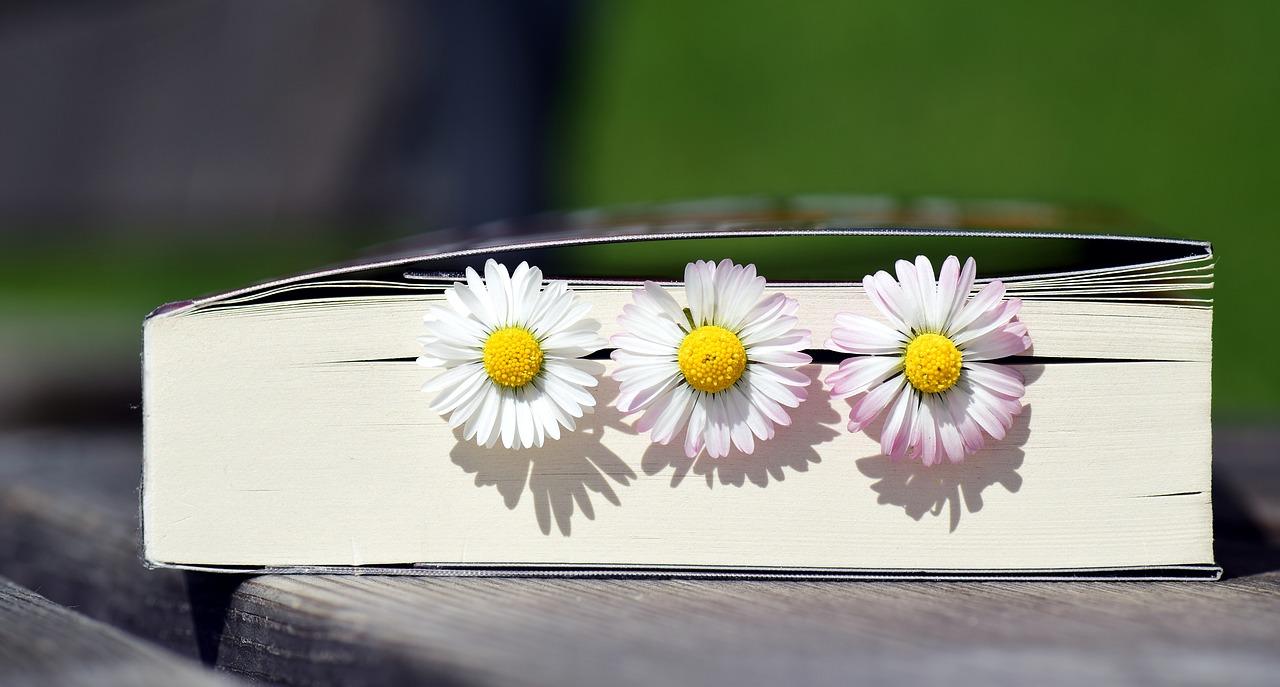 Book2319957 1280 8d54d8d6