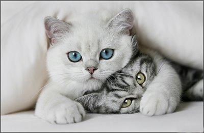 Cute cats cats 8477436 400 261
