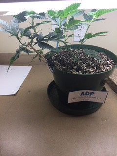 wweed grow-off plant