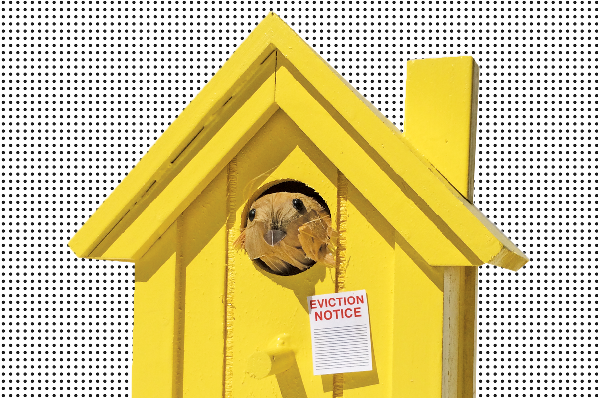 FeatureImage_Homeless-Birdhouse