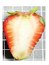 Albion_Fruit-Leaf_strawberry