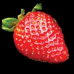 albion2_strawberry