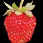 Hood_Fruit_strawberry