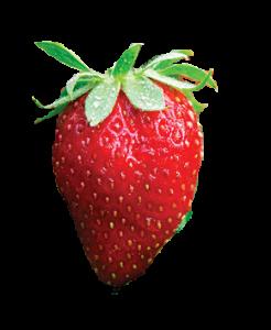monterey_strawberry