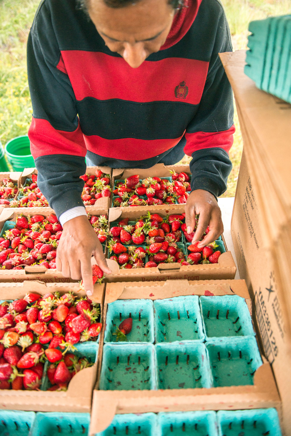 StrawberryFarmPickers_field_migrantworkersstrawberries_TT-5