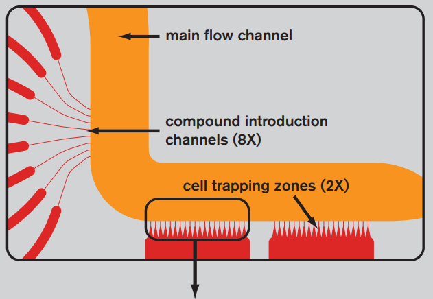 Cell trap in IonFlux plate