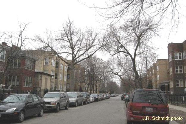 Apartment phalanx in central Albany Park