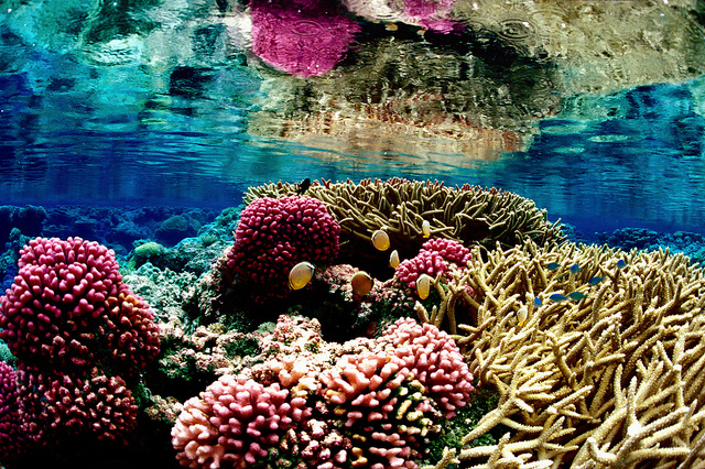 A coral reef ecosystem at Palmyra Atoll National Wildlife Refuge. (Flickr/USFWS Pacific)