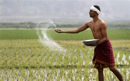 An Indian farmer sprays fertilizer at his paddy field in Burha Mayong east of Gauhati, India in February  2012. Agriculture is the source of livelihood for around 115 million farming families, about 70 percent of India's population. (AP/Anupam Nath)