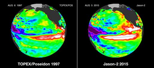 These false-color images provided by NASA satellites compare warm Pacific Ocean water temperatures from the strong El Nino that brought North America large amounts of rainfall in 1997, left, and the current El Nino as of Aug. 5, 2015, right. Warmer ocean water that normally stays in the western Pacific, shown as lighter orange, red and white areas, moves east along the equator toward the Americas. Forecasters say this El Nino is already the second strongest on record for this time of year and could be one of the most potent weather changers in 65 years. (NASA via AP)