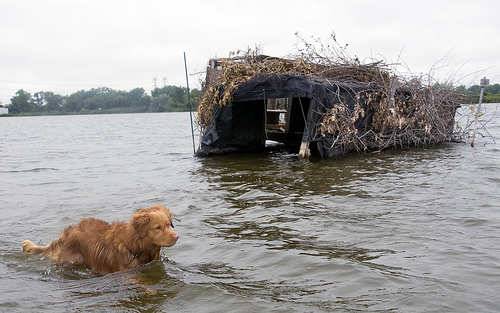 Buddy the dog and a duck blind on Wolf Lake near the Illinois and Indiana state border. (WBEZ/Chris Bentley)
