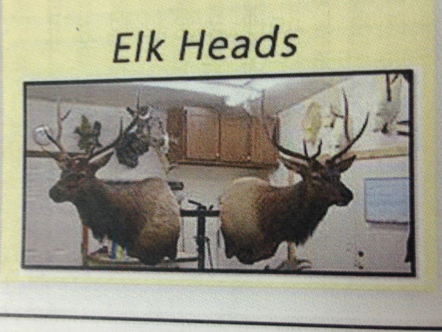 Elk heads. (DNAinfo/Mark Konkol)