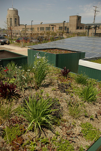The green roof atop Chicago's Center for Green Technology. (Flickr/Andrew Ciscel)