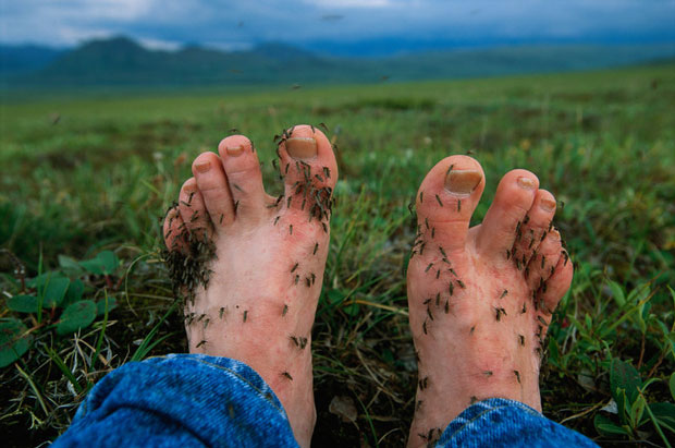 Feet and ankles are a feast for mosquitoes. (Joel Sartore/National Geographic)
