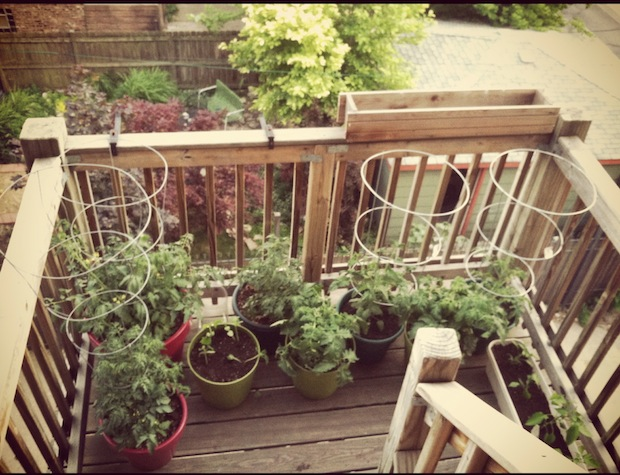 My apartment community garden in Logan Square. (WBEZ/Leah Pickett)