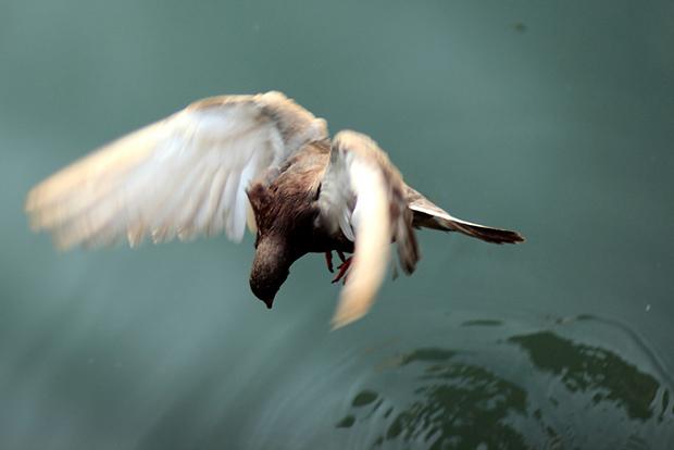 Landing (Flickr/Chris WIlson)