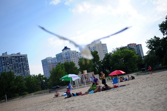 Seagull Blur (Flickr/Kirk McMahon)