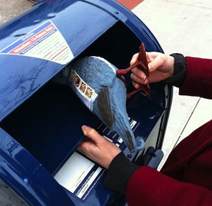 How to properly send a Pigeon Post. (16sparrows.com)