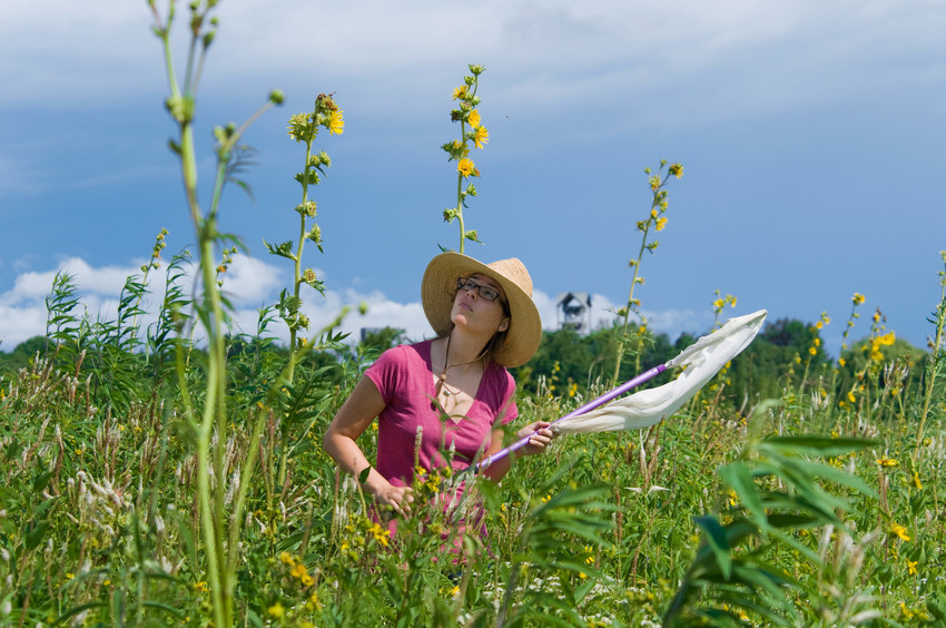 Rebecca Tonietto, ecologist and conservationist, capturing bees for identification. (Photo by Robin Carlson)