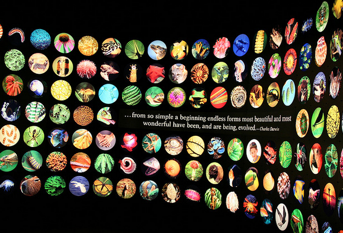 A display from the Field Museum's Evolving Planet exhibit. (Flickr/Rebecca Gaines)