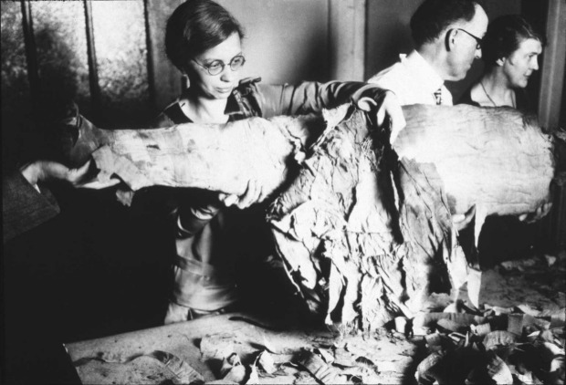 Date/individual unknown. Bad mummy tech: An unidentified employee unwraps one of the Oriental Institute's mummies in approximately 1910 (archival photo courtesy of The Oriental Institute at the University of Chicago)