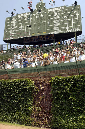 The Wrigley Field ivy was planted by Bill Veeck Jr. and the Cubs ground crew in 1937. (AP Photo/Stephen J. Carrera)