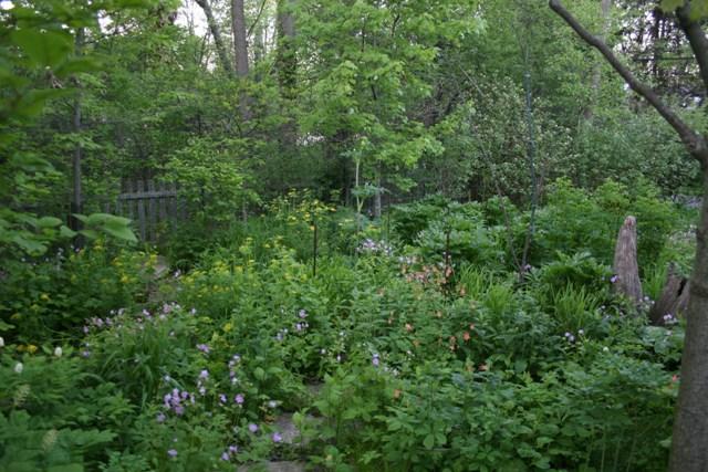 Rain garden at the home of landscape architect Cliff Miller. (Courtesy of Clifford Miller)
