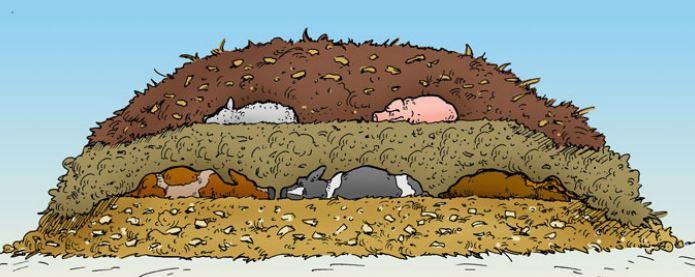 (Screenshot of 'Natural Rendering: Composting Livestock Mortality  and Butcher Waste' via Cornell.edu)