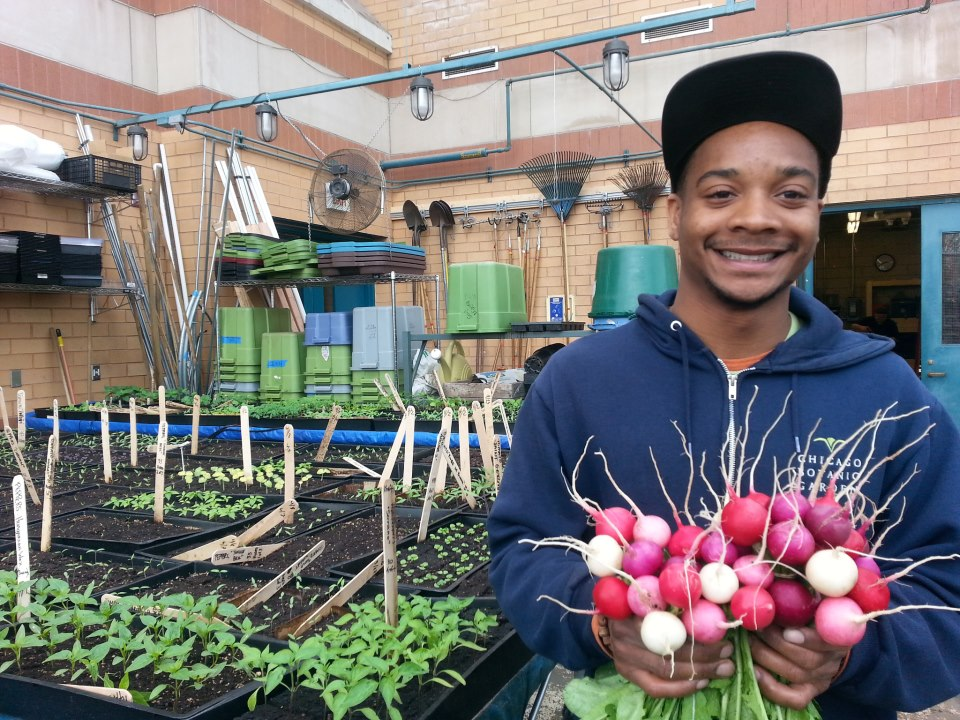 Darius Jones, 21, with easter egg radishes. Raised in gritty West Garfield Park, Jones struggled to turn his life around, but recently launched his own urban agriculture business. (Chicago Botanic Garden)
