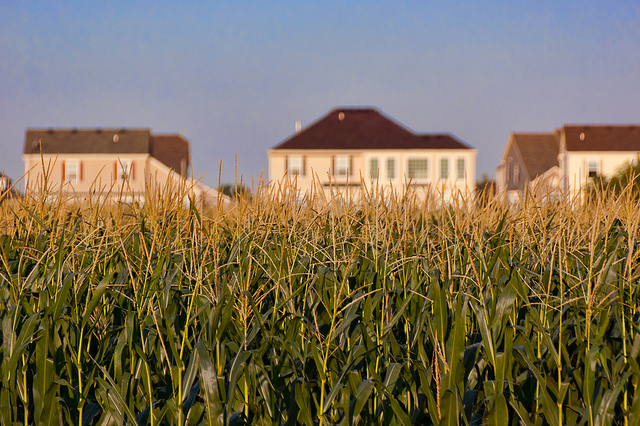 Exurban sprawl meets cornfield in Woodstock, Ill. Agriculture and suburban development are leading factors in the homogenization of local landscapes. (Eric Allix Rogers via Flickr)