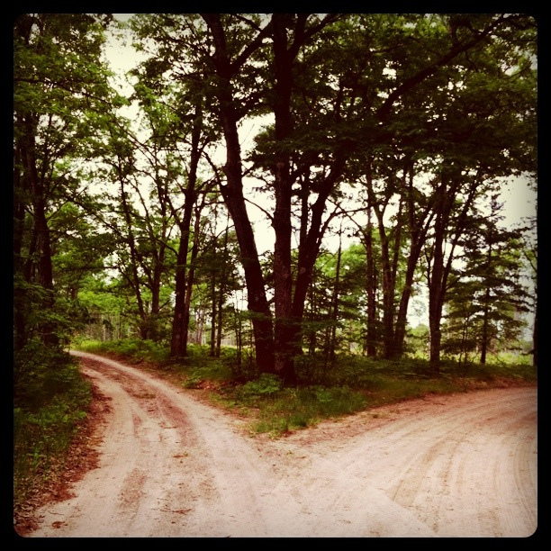Two roads diverged in a yellow wood and I . . . ? (Flickr/Michael Stevens)