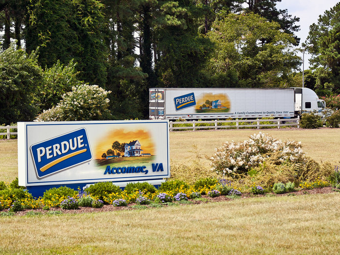 Perdue, the poultry giant, acquired the Niman Ranch name and reputation of raising animals without antibiotics in September. (John Greim/Universal Images Group/Getty Images)