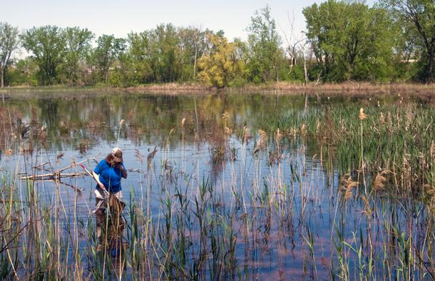 Looking for frogs in Hegewisch Marsh. (WBEZ/Chris Bentley)