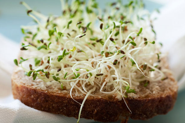For something many deem a 'health food,' sprouts regularly appear on official outbreak lists. (iStockphoto)