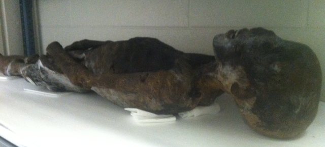 Unwrapped mummified remains. (WBEZ/Alison Cuddy)