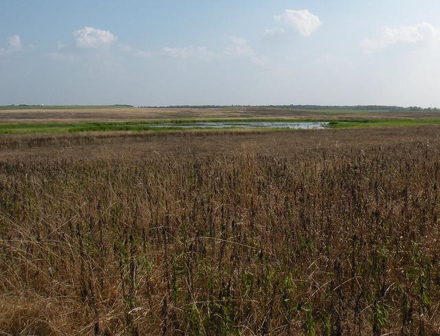 Orland Grasslands (Flickr/John W. Iwanski)