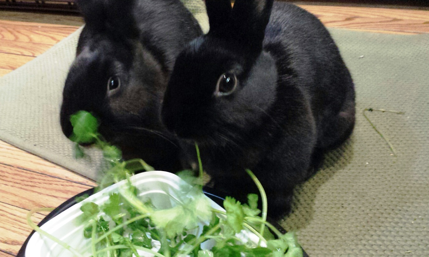 Binky and Queenie chowing down on some delicious organic greens