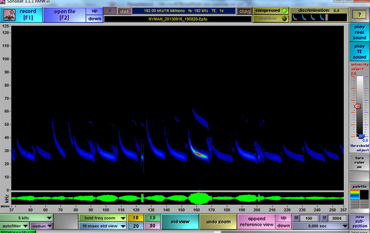 A screenshot from Sonobat software that shows bat call frequency and species. Researchers can use this to determine how active certain sites are. (Photo courtesy UWI)