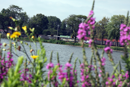 A view across Powderhorn Lake to the nearby trains. (WBEZ/Logan Jaffe)