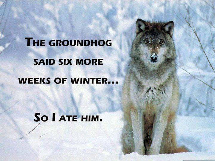 groundhog day wolf