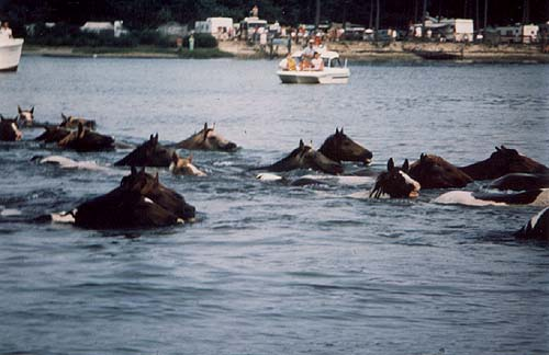 chinc ponies