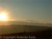 Lambs at Sunrise