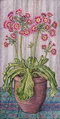 Pink Auricula Primulas
