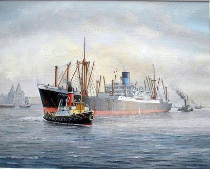Dardanus in the Mersey