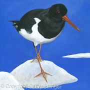 Oyster Catcher 2