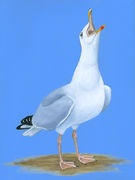 Sea Gull Oggy Oggy